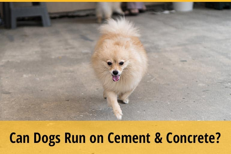 Can Dogs Run On Cement And Concrete