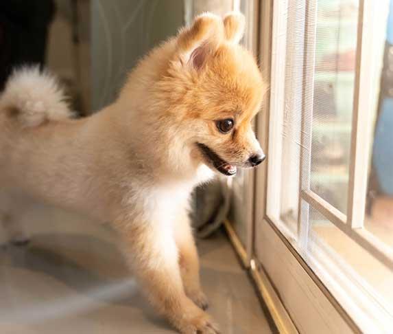dog staring through glass window