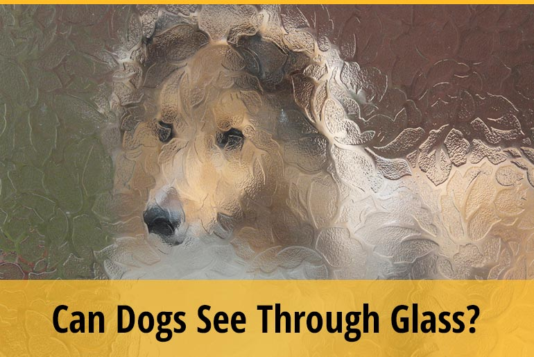Can Dogs See Through Tinted Glass