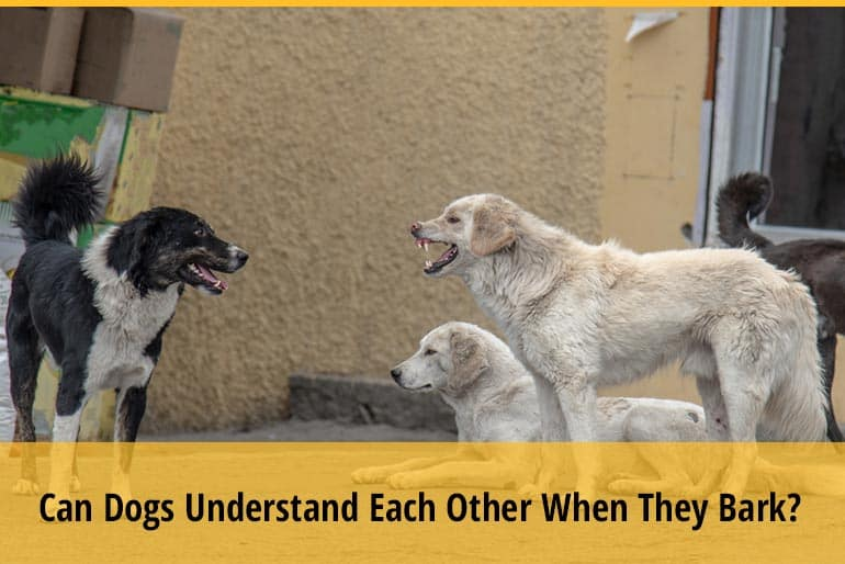 Can Dogs Understand Each Other When They Bark