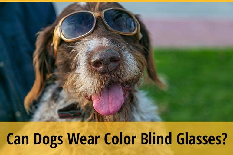 Can Dogs Wear Color Blind Glasses