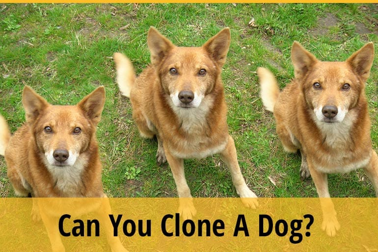 Can You Clone A Dog