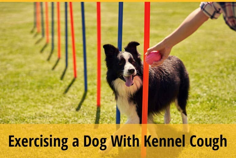 Can You Exercise A Dog With Kennel Cough
