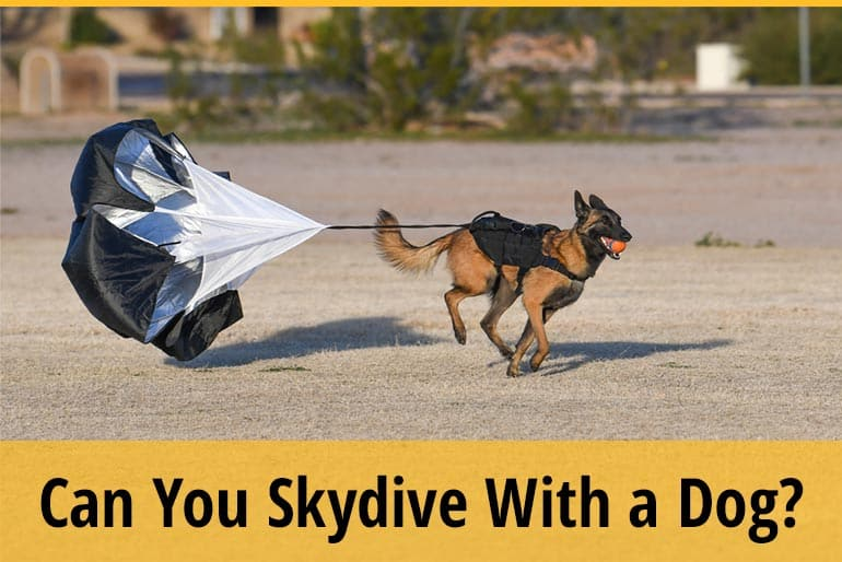 Can You Skydive With A Dog
