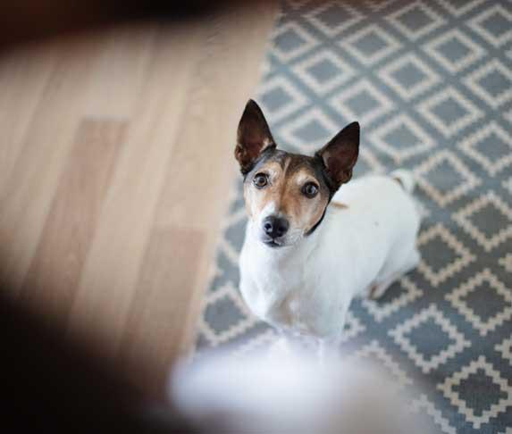 dog sensing owner's emotion