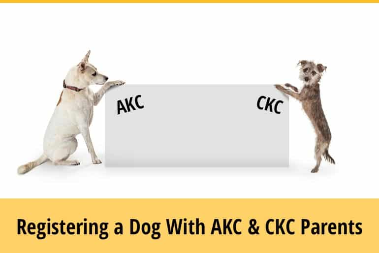 How To Register A Dog With AKC And CKC Parents