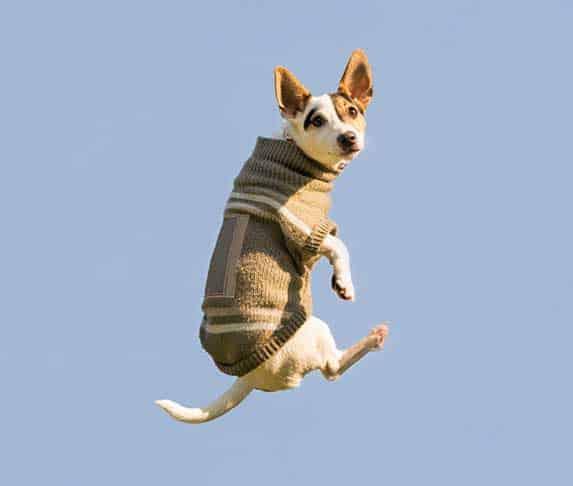 falling dog