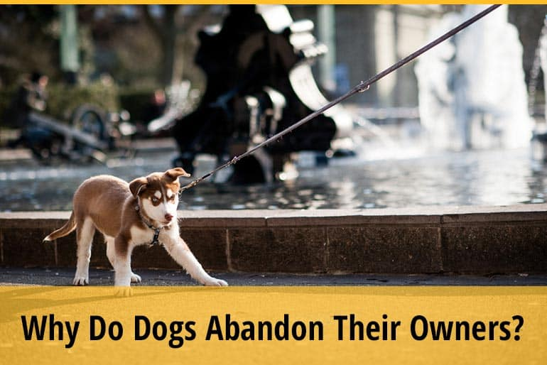 Why Do Dogs Abandon Their Owners
