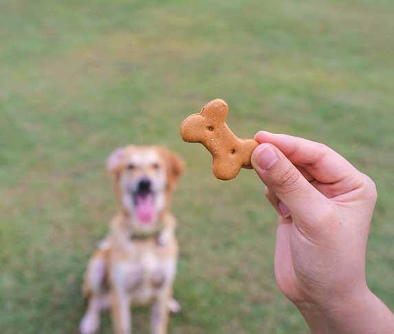 dog staring at treats