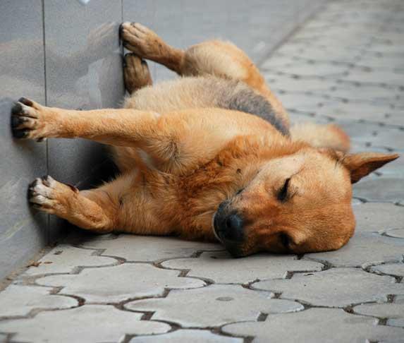 dog sleeping against wall