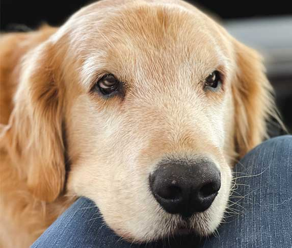 dog staring at its owner