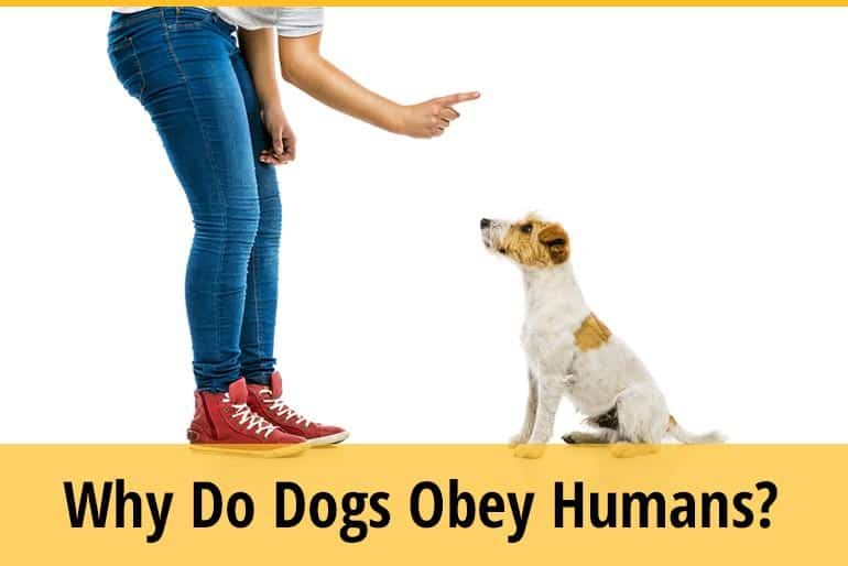 Why Do Dogs Obey Humans