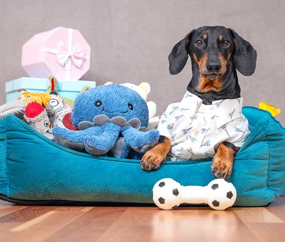 dog with collection of toys