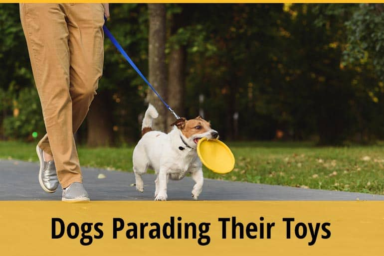 Why Do Dogs Parade Their Toys