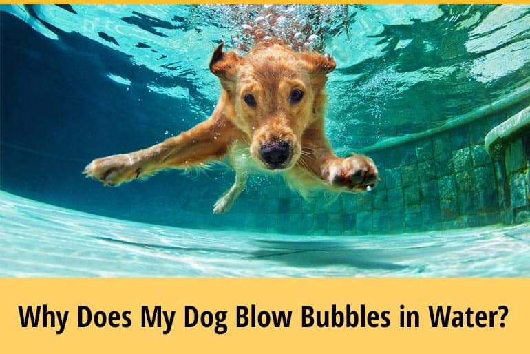 Why Does My Dog Blow Bubbles in Water
