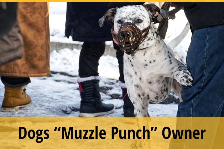 Why Does My Dog Muzzle Punch Me