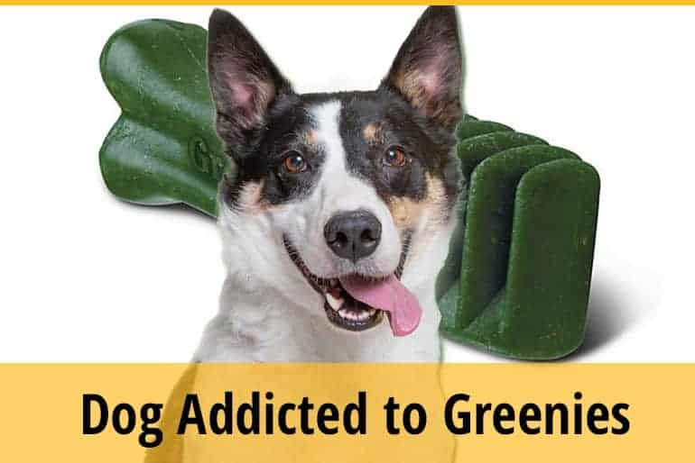 Why Is My Dog Addicted To Greenies