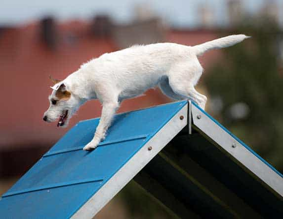 dog on a high surface