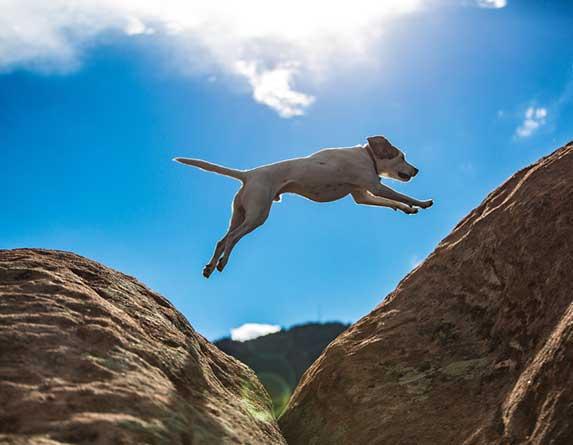 dog jumping off cliffs