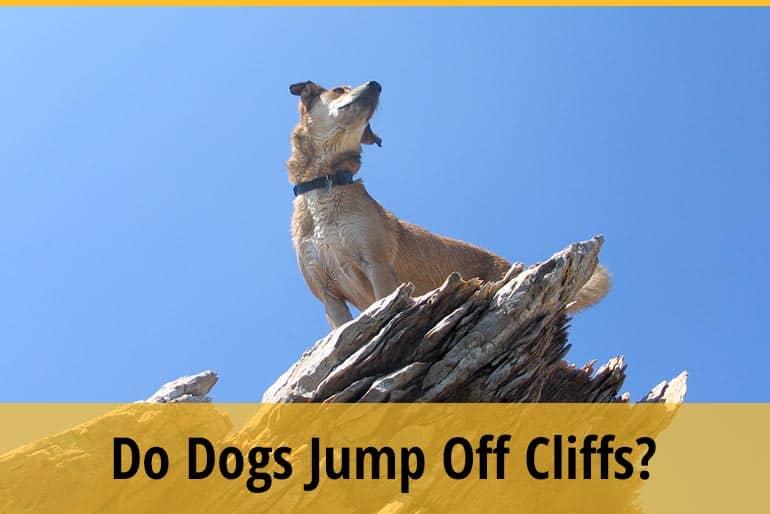 Do Dogs Jump Off Cliffs