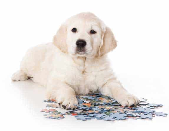 dog playing with puzzle