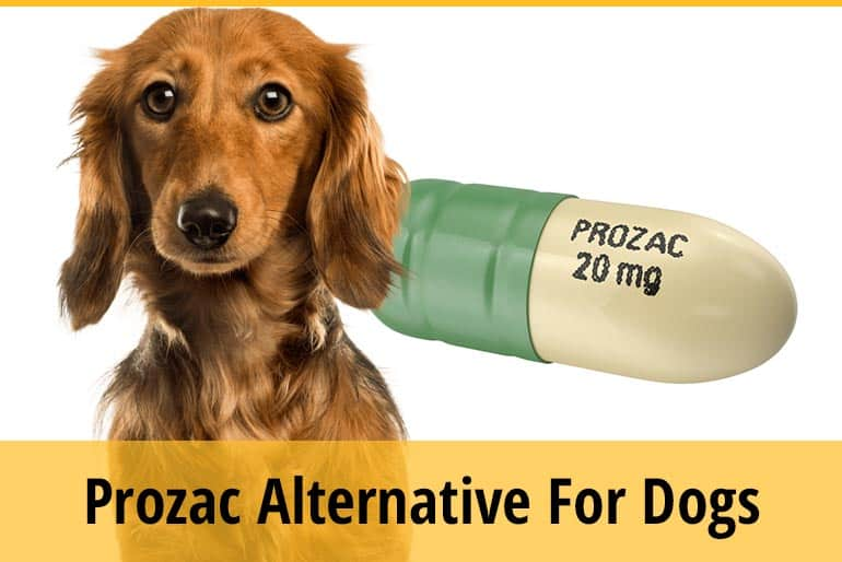 List of Alternative To Prozac For Dogs