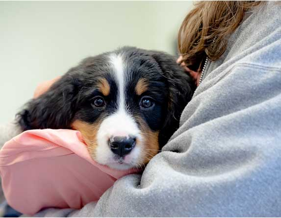 dog held like a baby