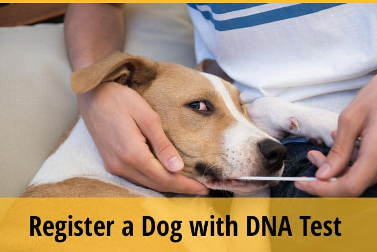 Can You Register a Dog with DNA Test