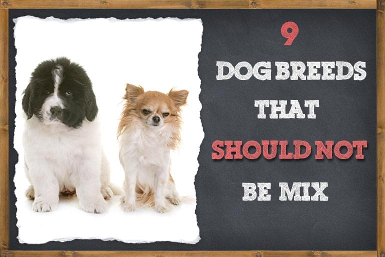 Dog Breeds That Should Not Be Mixed