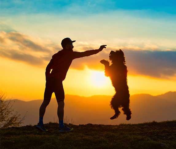 Dog and owner bonding