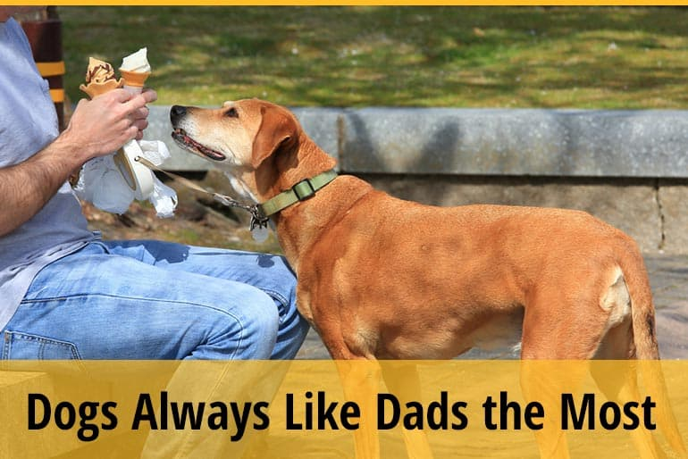 Why Do Dogs Always Like Dads the Most