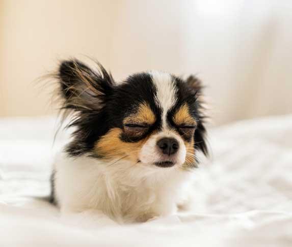 a groggy dog