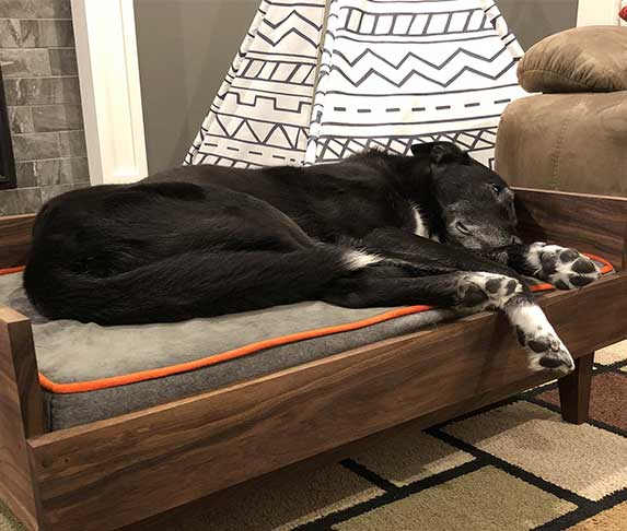 dog lying on elevated bed